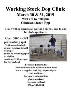 Stock Dog Clinic- ONE Spot left!