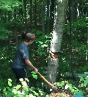 Tree Removal / Stump  Removal / Cleanup service