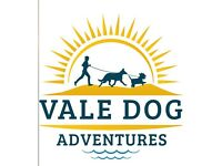 Vale dog adventures -your dog walking and pet sitting service for the Vale of Glamorgan