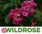 Wildrose Stamp & Coin