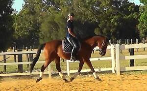 TB Gelding Pallinup Area Preview