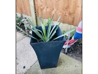 Exotic plant with pot £25