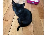 Free black female kitten - 3 months old