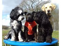 HOUNDABOUT FUN-PARK... / FUN AND AGILITY PARK FOR YOUR HOUNDS..