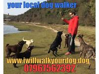 Dog walker pet sitter
