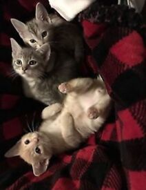 3 kittens ready to go