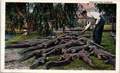 Men's 1920s Style Ties, Neck Ties & Bowties 1920s Old Florida Postcard Feeding Time FL Man in Tie Feeds Alligators Gators  $9.71 AT vintagedancer.com
