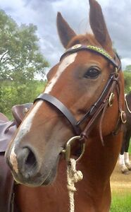 Stock horse mare Gloucester Gloucester Area Preview