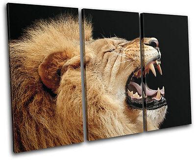 (Lion Roar Wild Animals TREBLE CANVAS WALL ART Picture Print VA)