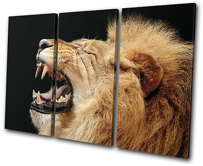 (Animals Lion Roar Wild TREBLE CANVAS WALL ART Picture Print VA)