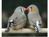 Alsorted finches