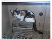 Lost - young female cat/kitten in Bilborough. White, black & ginger. Beloved pet