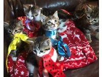 Lovely playful kittens 😍😍😍