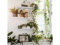 MALMBÄCK Display shelf
