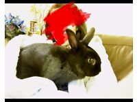 Female Rabbit Looking For Good Home