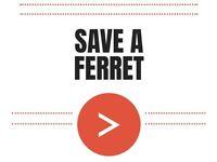 Ferrets needing homes!