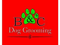 B&C Dog Grooming - We provide professional dog grooming service