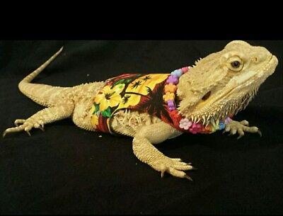 Lil' Bestie Bearded Dragon reptile Harness and Leash Hawaiian Vacation