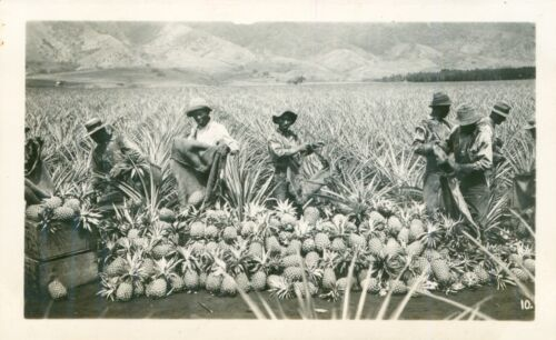 1940 Picking pineapples Hawaii photo