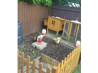 Chicken coop and run rabbits guinea pigs ect.