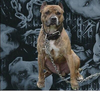 Pit Bull Dog Camo K9 Demon Hydrographic Water Transfer Hydro Dip Dipping Film