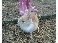 4x bunny rabbits
