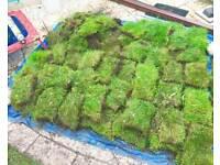 FREE lawn turf