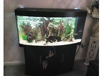 Jewel Vision 260 + Cabinet & Full Setup ( Inc Accessories & media)