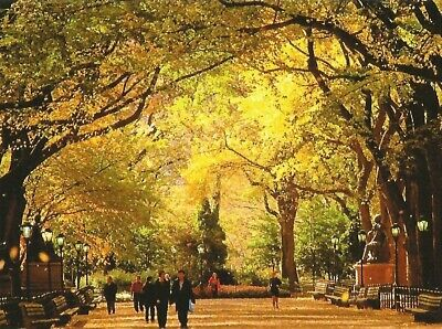 Postcard New York City Central Park Mall in Autumn Photo: Stuart Westmorland MNT