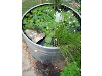 Decorative water pots for your garden