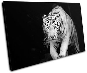 Tiger-eye-Animals-Wild-Nature-SINGLE-CANVAS-WALL-ART-Picture-Print-VA