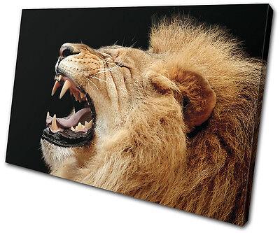(Animals Lion Roar Wild SINGLE CANVAS WALL ART Picture Print VA)