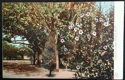 Palm Beach Florida Postcard Vtg Early 1900s Munyon Island Hybiscus Flower