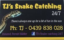 Tj's snake catching 24/7 Cashmere Pine Rivers Area Preview