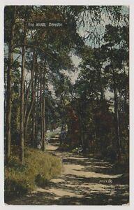 Somerset postcard - Pine Woods, Clevedon