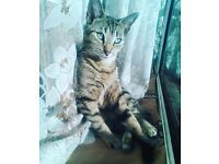Missing Cat - Tifa - Since Midnight - Bromley South / Turpington Lane