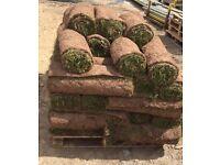 2 full pallets of fresh cut turf