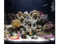 94L Marine tank set up and stand + extras
