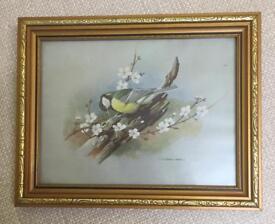 Framed Bird Print