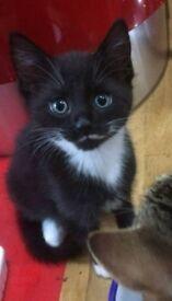 Kittens male