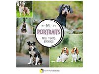Dog portrait photography sessions