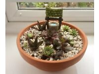 Succulents arrangement with white top dressing