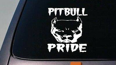 Pit Bull Stolz Amerikanischer Pitbull 6