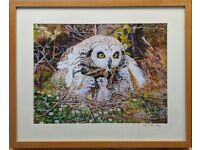 Framed Print of Owl and Owlets