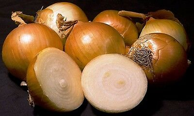 Yellow Sweet Spanish Onion Seeds  Non Gmo  Variety Sizes  Free Shipping  Sale