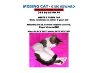 Cat Missing- updated tel number