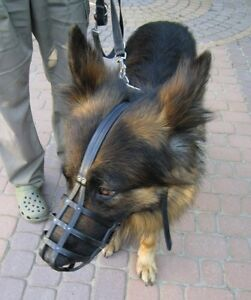 German Shepherd Leather Muzzle
