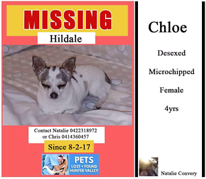 MISSING  FROM HILLDALE Martins Creek Dungog Area Preview