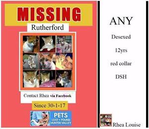 """"""" ANY """" is missing from Rutherford/ Benhome Nursing Home Maitland Rutherford Maitland Area Preview"""