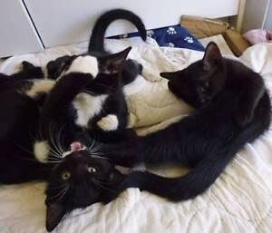 Free Gorgeous 9-week Old Kittens Wagin Wagin Area Preview